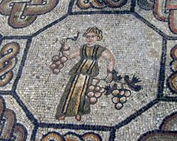 Grape mosaic