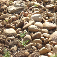 Chateauneuf stones
