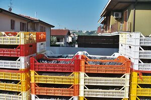 Amarone drying boxes