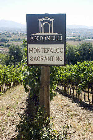 Antonelli vineyard