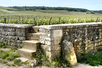 Romanée-Conti vineyard