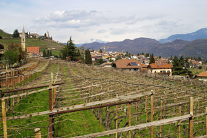 Vineyards at Tramin